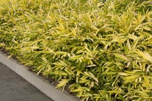 Les diff rentes utilisations des bambous dans un jardin - Comment eliminer les bambous dans un jardin ...