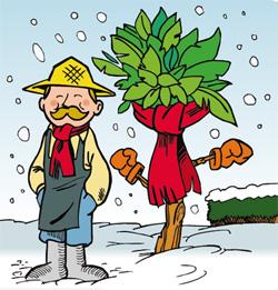 Hiverner les agrumes en pots